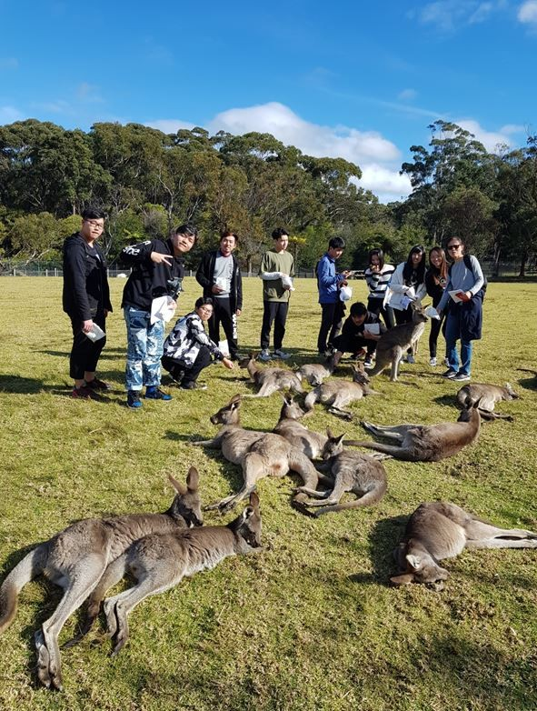 International students on excursion posing with kangaroos